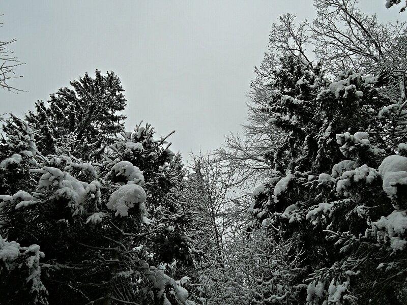 Внезапная зима