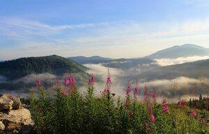 Утро с туманами и иван-чаем