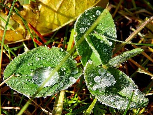 застывшие капли дождя