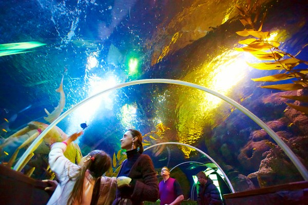 В 2021-ом вКупчино построят наибольший вгороде океанариум