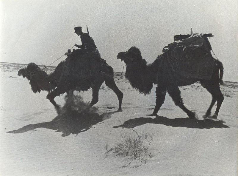 Пограничник на верблюде. Туркменистан, 1930-е
