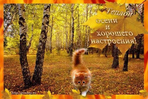 Открытка - золотая осень с котиком