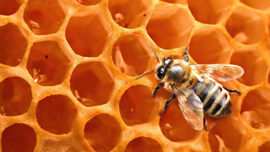 4. Пчелиный мед. На 100 грамм продукта калорийность пчелиного меда составляет 320 калорий. Мед содер