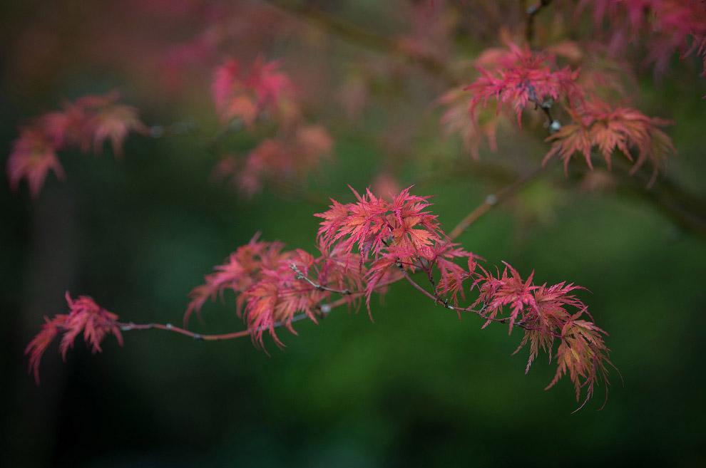 23. Осень заканчивается, впереди — зима. (Фото Robert F. Bukaty):