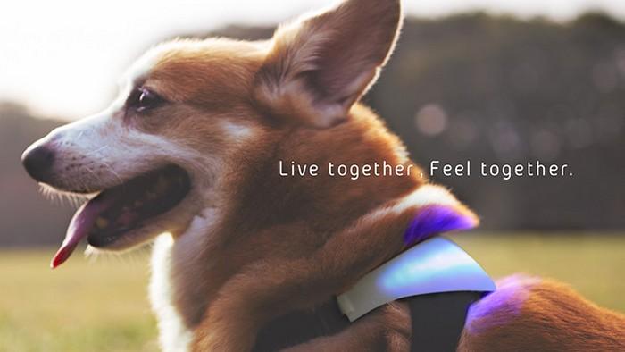 Как понять, что чувствует собака: ошейник Inupathy Ошейник Inupathy беспрерывно измеряет частоту сер