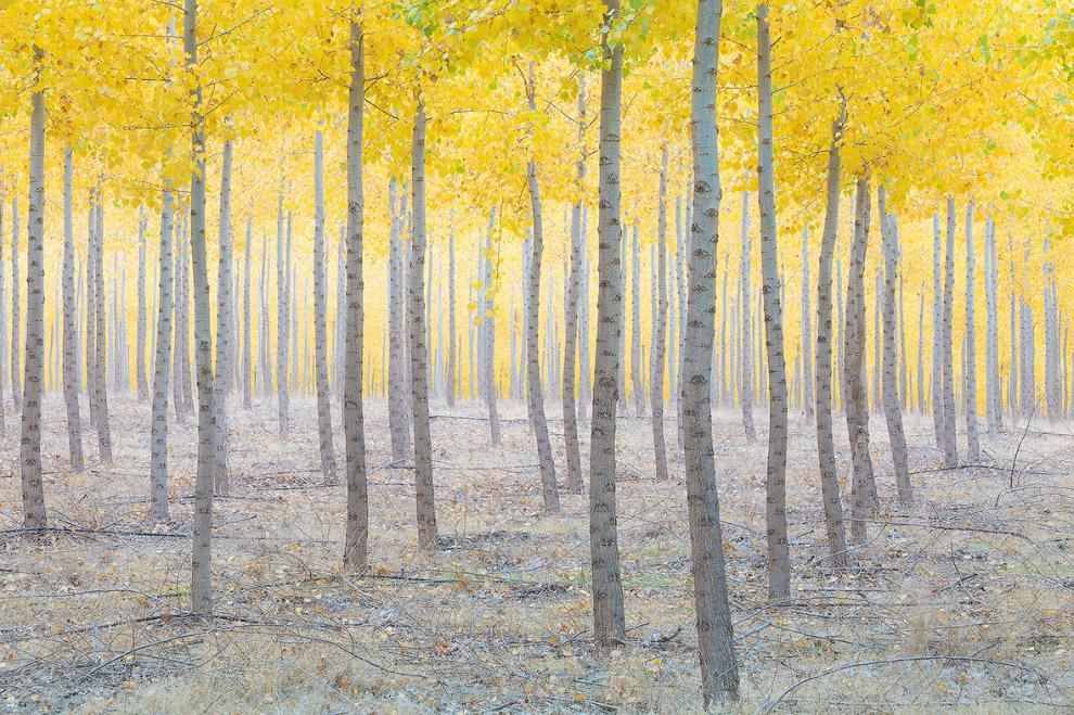 8. Категория «Классический вид», 1 место. Гроза в Гранд-Каньоне, Национальный парк. (Фото James