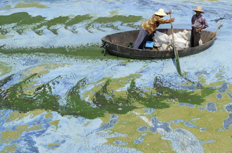 24. Загрязненное озеро Чаоху, в провинции Аньхой, Китай