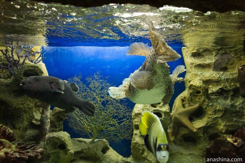 Обитатели океанариума, Океанариум в парке Ривьера, Сочи