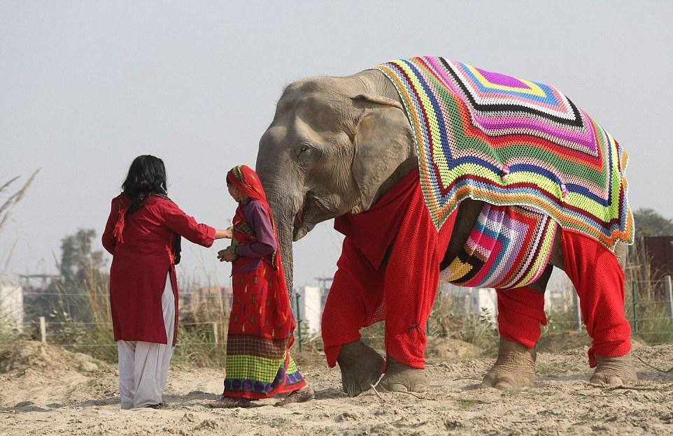 Пижамы для слонов
