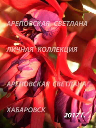 НОВИНКИ ФУКСИЙ. - Страница 5 0_19969b_45741dc1_L