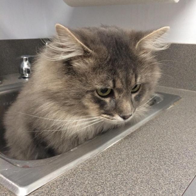 © CatStoleMyPancake/reddit.com  Уменя вообще-то нет кота. Онпросто запрыгнул вмою машину и