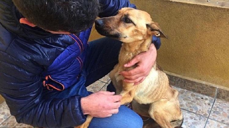 10 месяцев эту собаку изнуряли голодом. Но сейчас ее просто не узнать!