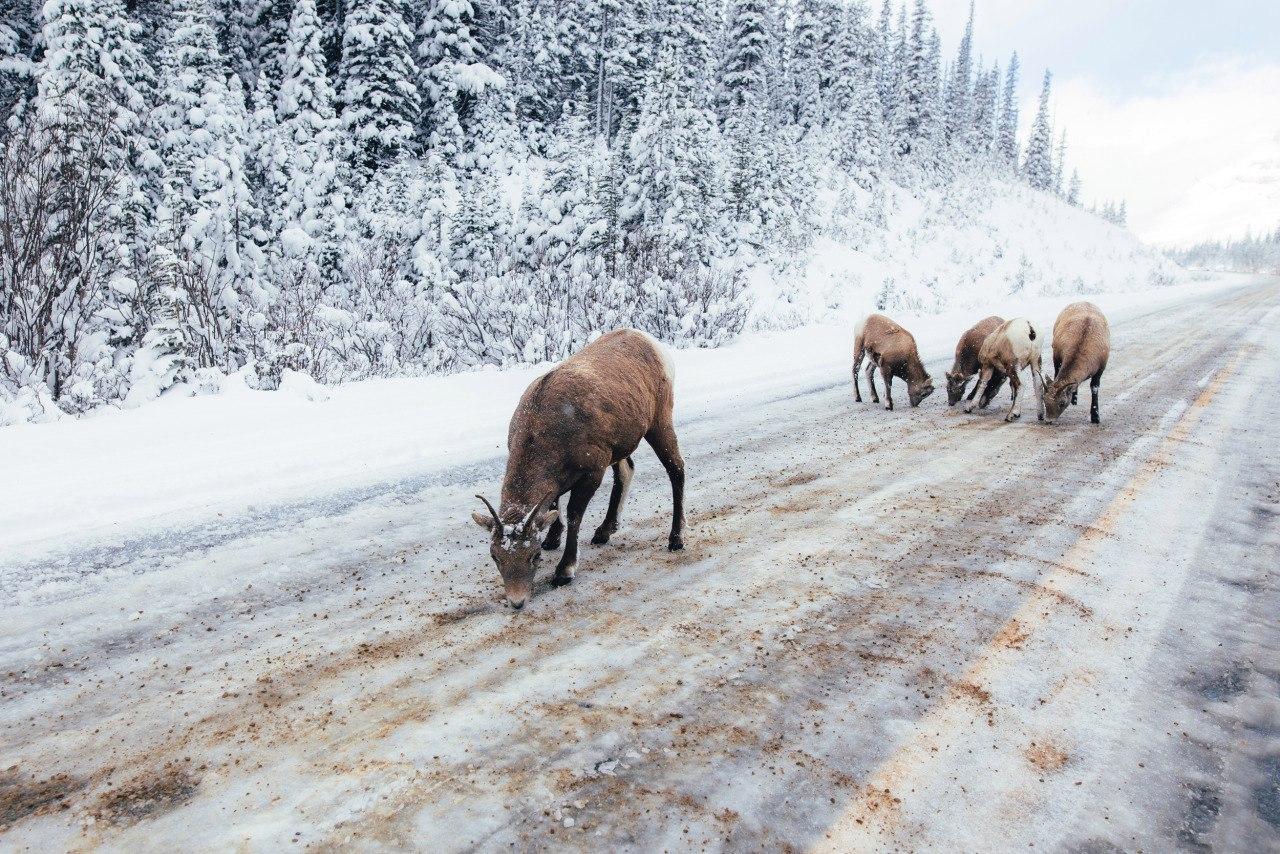 Национальный парк Банф, Альберта, Канада. Фотограф Brian Fulda