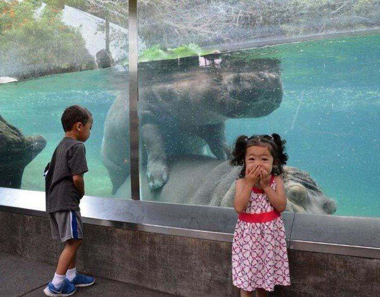 Ожидания и реальность: 19 забавных случаев, когда поход в зоопарк накрылся медным тазом.