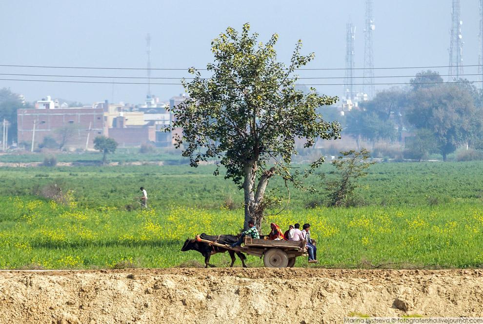 31. Женщина что-то моет в ведре, юноша пинает балду, коровы и коза отдыхают в тени, девочка в я
