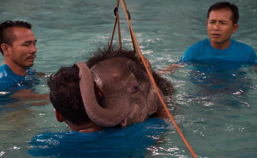 «К четвёртой или пятой сессии она будет наслаждаться плаванием ещё больше. Она ещё маленькая, п