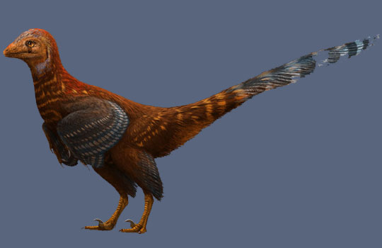 Найдены останки динозавра-птицы, жившего 125 000 000 лет назад