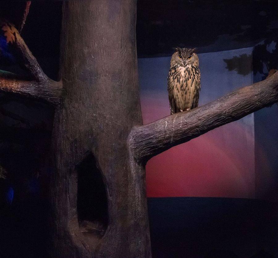 Eric Pillot, Owl and dusky light, 2015, Courtesy of Galerie Dumonteil
