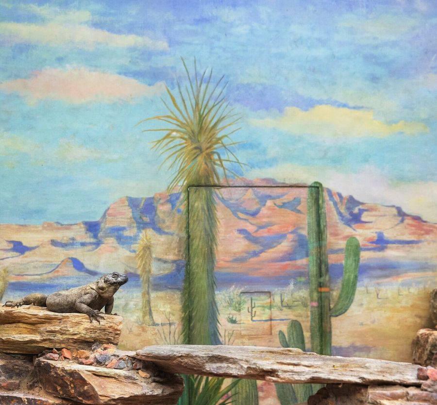 Eric Pillot, Reptile and cactus, 2015, Courtesy of Galerie Dumonteil
