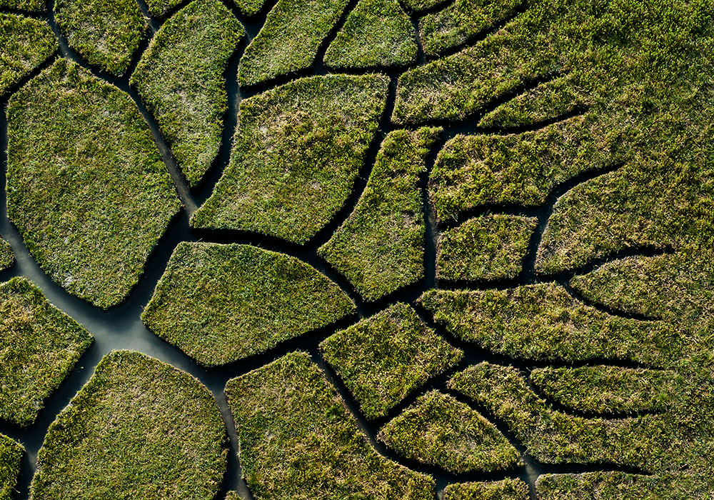 World Tree: A Branching River Etched into the Ground by Krisztian Balogh
