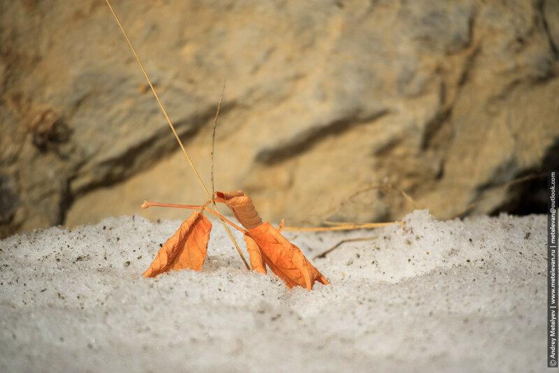 опавший лист причудливо лег на землю