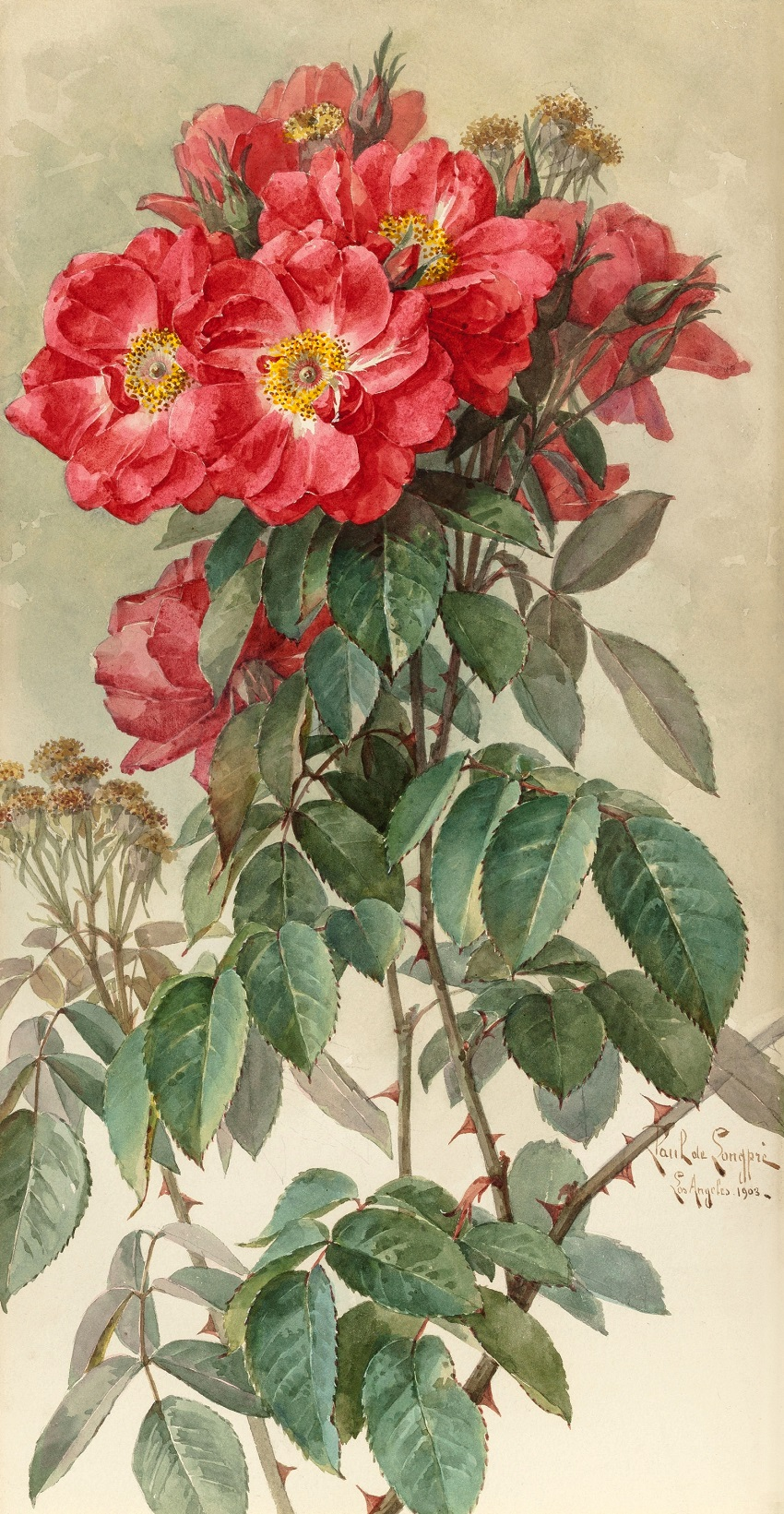 Branches of Ragged Robin Roses, 1903