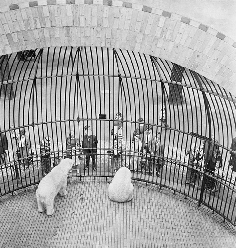 1930-е. Люди за решеткой, Берлинский зоопарк