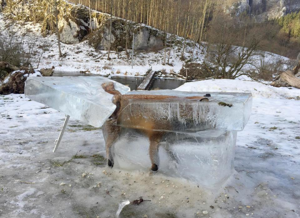 Лиса вмерзла в лед в Германии