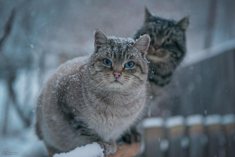 Подборка интересных и веселых картинок 18.01.17