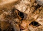 Кошки разное