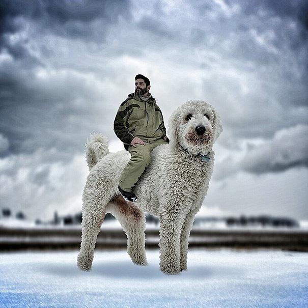 Используя камеру и Photoshop, Кристофер превращает своего небольшого пса в настоящего гиганта, а зат