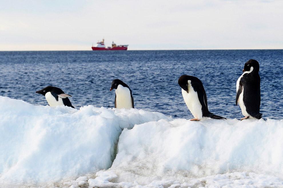 10. Море Росса, Антарктида. Море Ро?сса — окраинное море тихоокеанского сектора Южного океана.