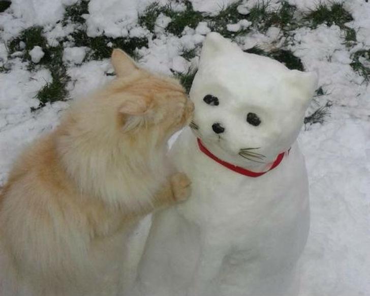 Даже котику понравился.