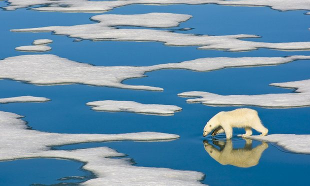 Ученые сообщили орекордной скорости таяния арктических льдов