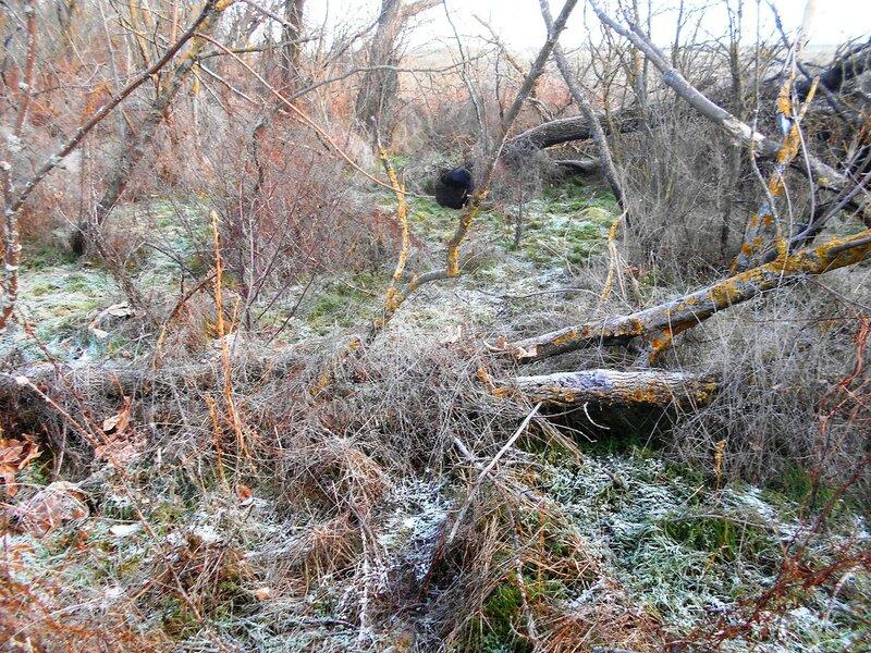 Украшения в лесу от Дедушки Мороза ... DSCN0421.JPG
