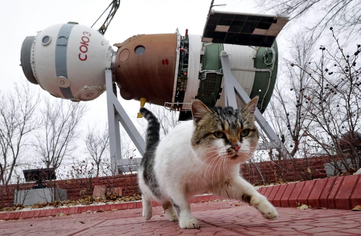 Тайный пришелец из космоса: Кот-космонавт