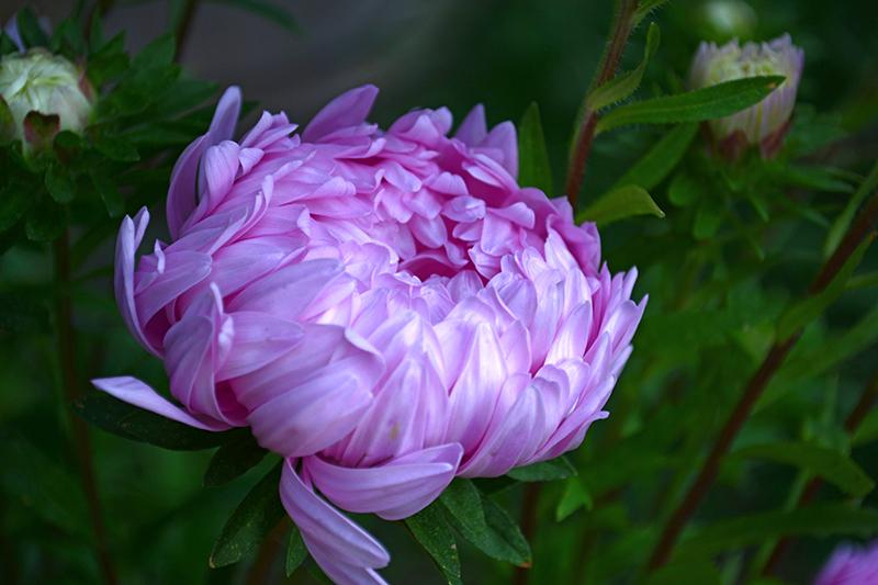 цветы дождь 4.jpg