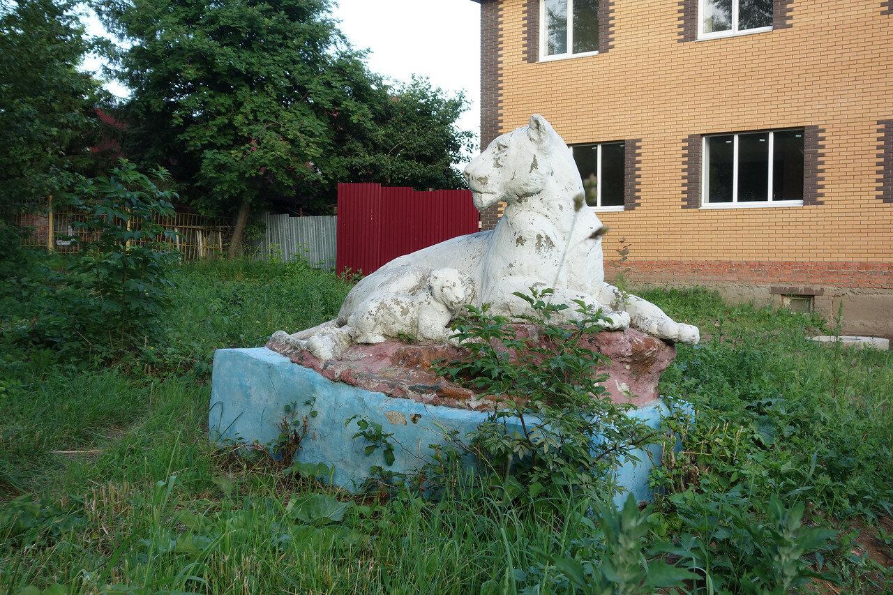 львица и львёнок... кто они?