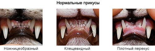 Пороки и недостатки: прикус - перекус, недокус, твист, лицевые ассиметрии 0_1b4a65_94fbee5d_L