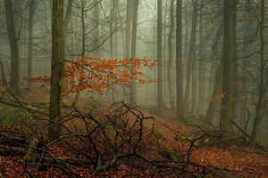Ветка и туман.....