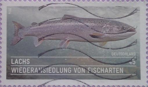 2014 рыба 45