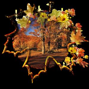 foglie___1_.png