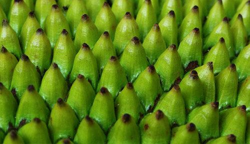 �������� ������� - Jackfruit on the outside