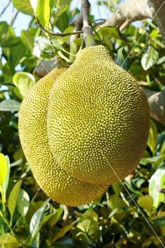 Jackfruit on the outside