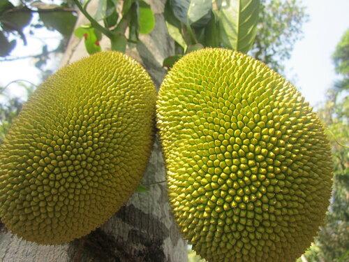 Jackfruit on the outside ����� ���������