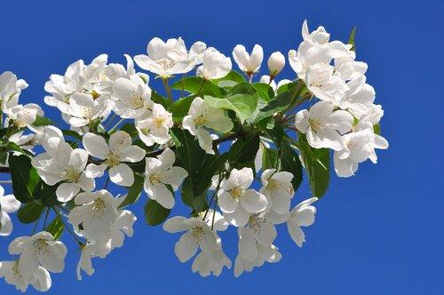 Весеннее цветение - www.GdeFon.ru