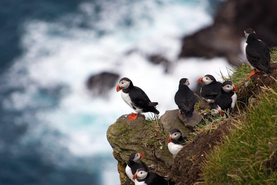 9. Мичинес (Фарерские острова) Мичинес – место, где вы можете насладиться одиночеством. Кроме стай т