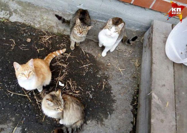 Пока пушистиков подкармливают соседи, но они боятся, что с наступлением зимы кошачье семейство погиб