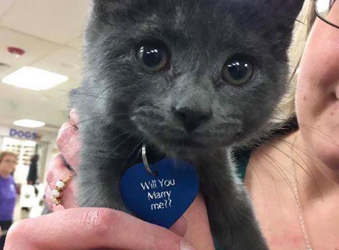Кэт заметила, что на шее котенка красуется сердечко с надписью: «Ты выйдешь за меня замуж?»