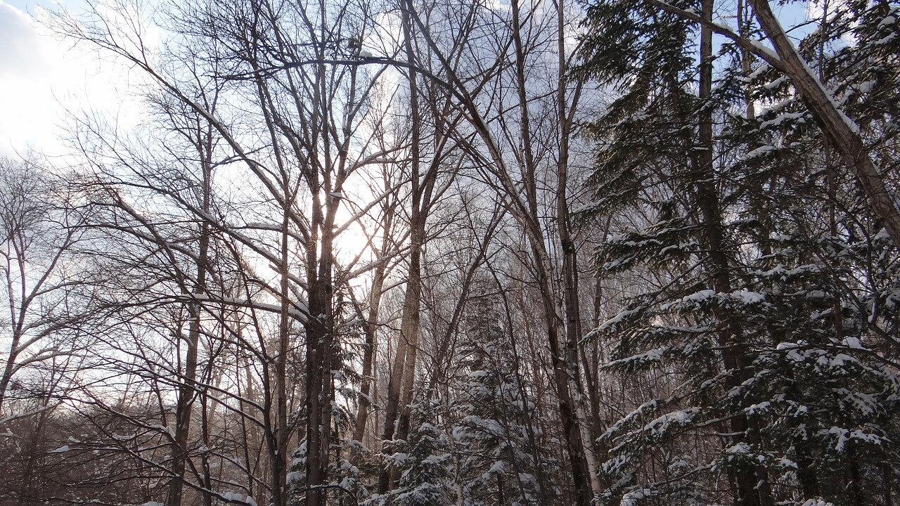 Зима в тайге